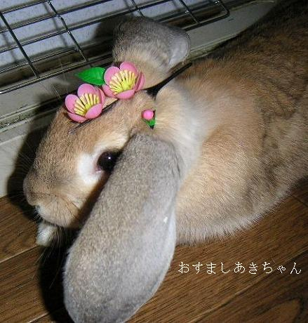 頭にお花乗っけられても嫌がらないんだね・・・。