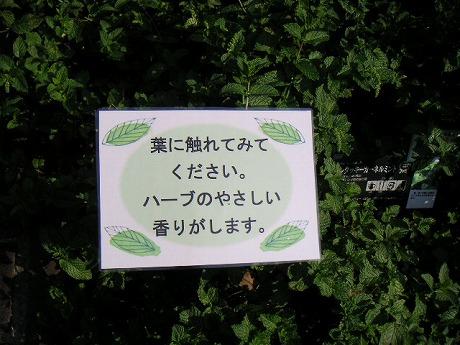 葉に触るとよい香りがするんです。
