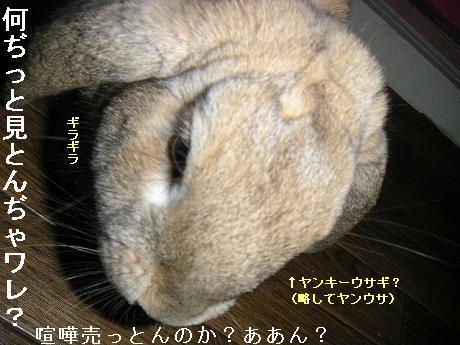 ヤンキーウサギ。(略してヤンウサ)