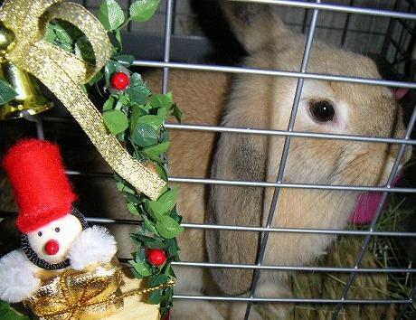 メリ~クリスマス!