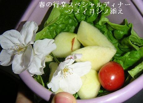 春の行楽スペシャルディナー。