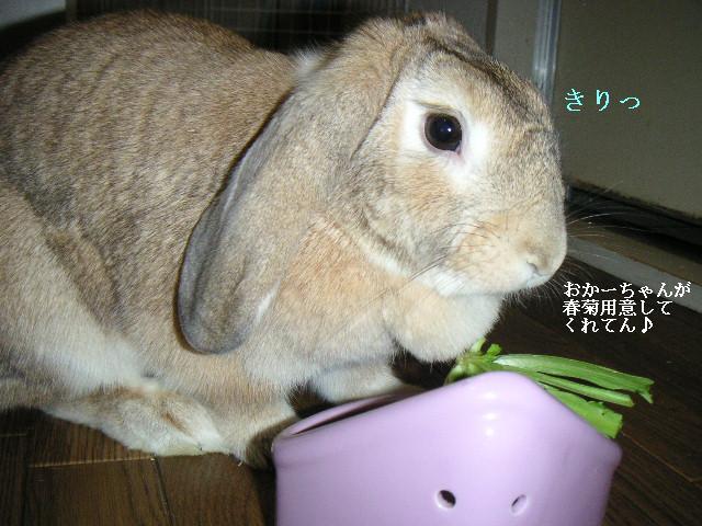 あきちゃんmeets春菊の巻。