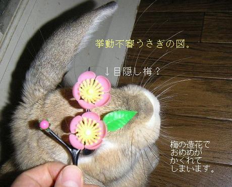 お花つながり。