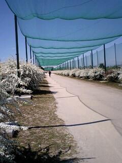 20070320国Ⅰ下の花道