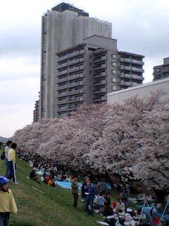 20070331ビル桜人