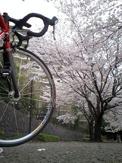 20070402桜とmy自転車