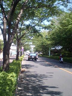 20070429桜堤通りにて