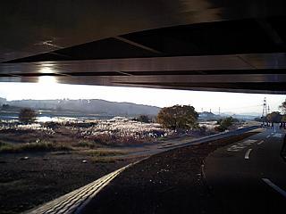 稲城大橋下の秋景s