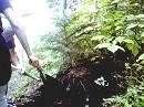 NEC_2006.8.15.momi.jpg