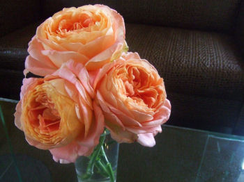 018-rose.jpg