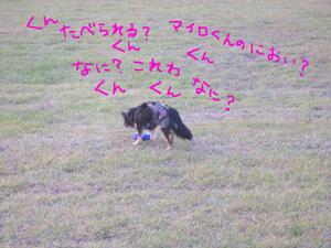 myro2_11.jpg
