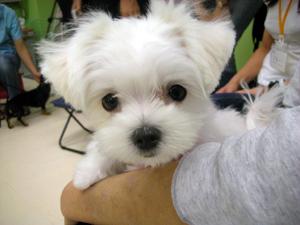 puppy21.jpg