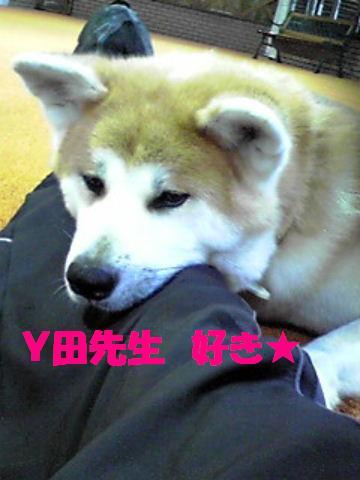 Y田先生に甘えるあん