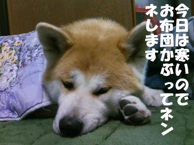 寝てる場合じゃないよ!!