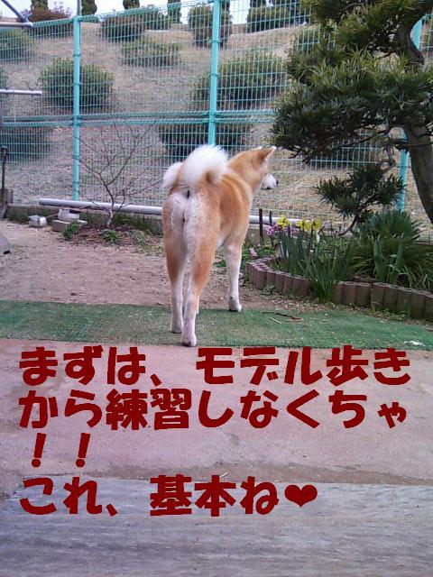 8頭身 秋田犬です