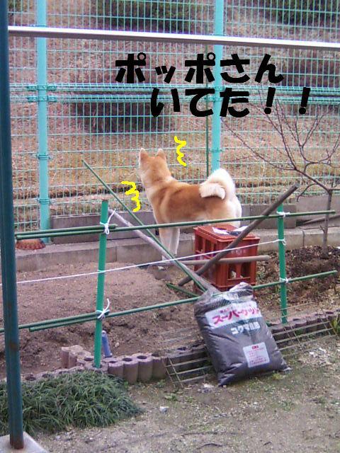 柵がありますよ!!