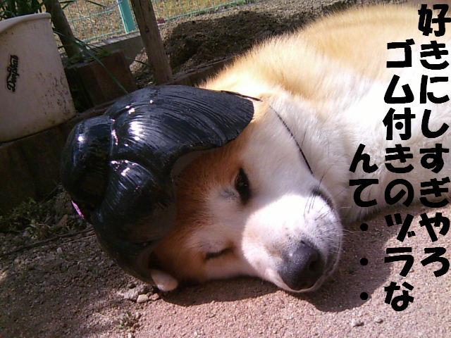 梅子に名前変更~