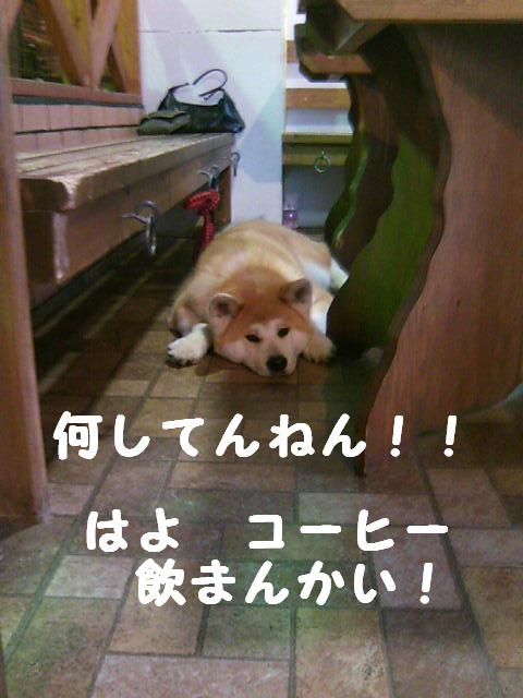大阪の女やさかい~