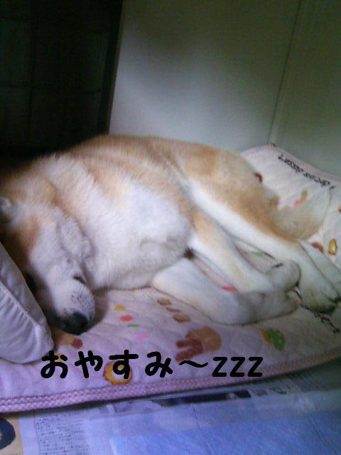 はい、おやすみ