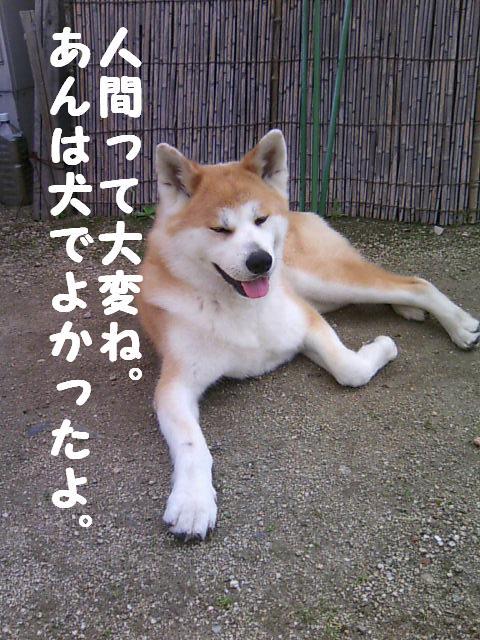 犬になりたい