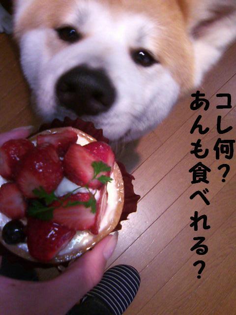 食べれません