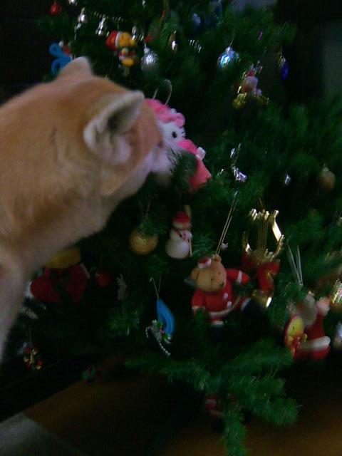 クリスマスツリーだしました