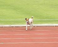 070811犬1