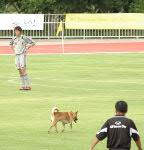 070811 犬2-3
