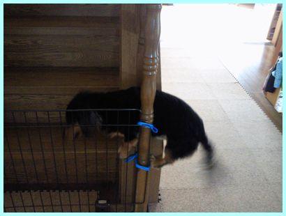 NEC_0509_20110725103057.jpg