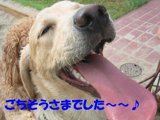 20060615201140.jpg