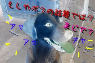 20060905001357.jpg