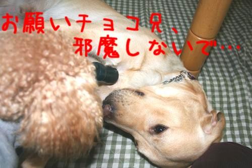 2007.01.17.06.jpg