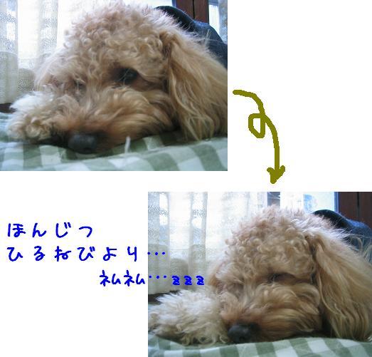 2007.02.09.1.jpg