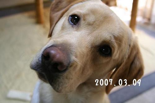 2007.03.09.1.jpg