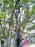 木と戯れるアフォ兄弟・・・