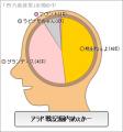 蒼紫の脳内