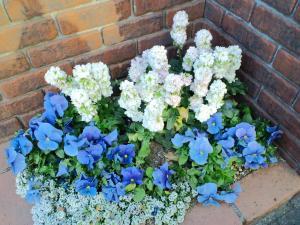 2011.04可愛い花壇
