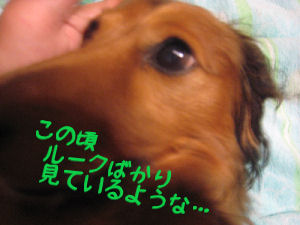 IMG_0030830.jpg