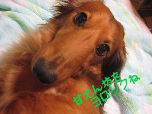 IMG_0033830.jpg