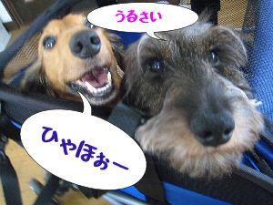 IMG_0035907.jpg