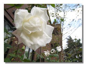 akiyugure2.jpg