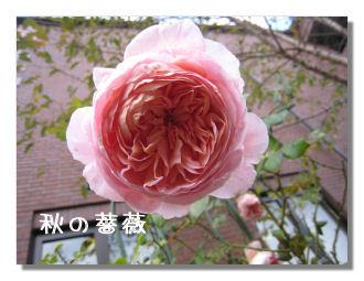 akiyugure3.jpg