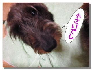 nashi10.jpg