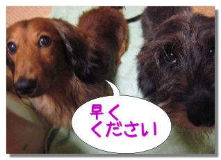 nashi6.jpg