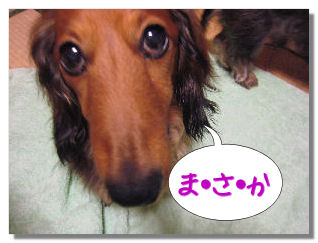 nashi8.jpg