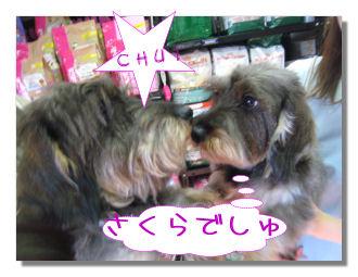 sakurachan6.jpg