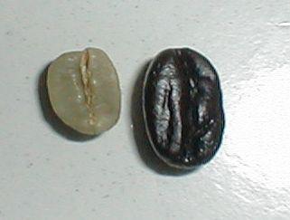 モカの生豆と煎立て豆