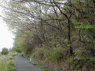芽吹き萌える木々
