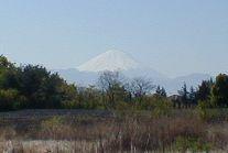 朝富士遠望
