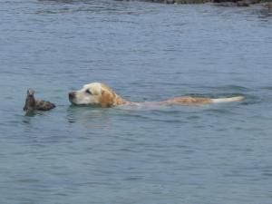 鳥と泳ぐ犬